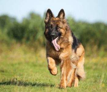Athletic peformance animals