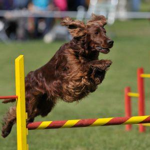 athletic performance dog 2